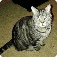 Adopt A Pet :: Mo-12279 - Richardson, TX
