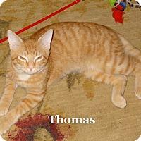 Adopt A Pet :: Thomas - Bentonville, AR