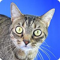 Adopt A Pet :: Tigger - Carencro, LA