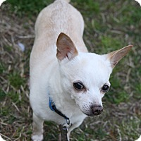 Adopt A Pet :: Shaq - Hayes, VA