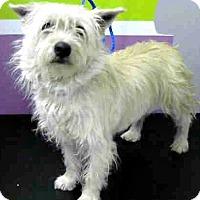 Adopt A Pet :: Molly-ADOPTION PENDING - Boulder, CO