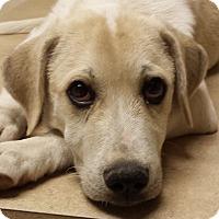Adopt A Pet :: Chevy - Preston, CT