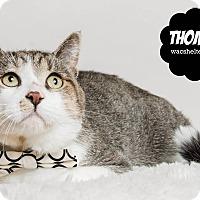 Adopt A Pet :: Thomas - Wyandotte, MI