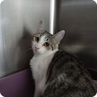 Adopt A Pet :: MADISON - Tucson, AZ