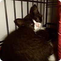 Adopt A Pet :: JONAH - Medford, WI