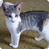 Adopt A Pet :: Sophie - Butner, NC