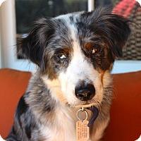 Adopt A Pet :: Penny Royale - Los Angeles, CA