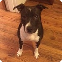 Adopt A Pet :: Holly - Nashville, TN