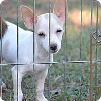 Adopt A Pet :: Kensey - Wilminton, DE
