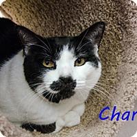 Adopt A Pet :: Charlie - Hamilton, MT