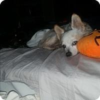 Adopt A Pet :: Precious - Gulfport, MS