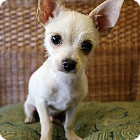 Adopt A Pet :: Eli - Southington, CT