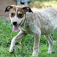 Adopt A Pet :: Otto - Kittery, ME