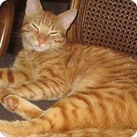 Adopt A Pet :: Shalimar - Cerritos, CA