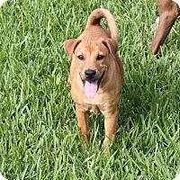 Adopt A Pet :: COLBY - Wellington, FL