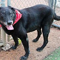 Adopt A Pet :: Buck - Memphis, TN