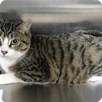 Adopt A Pet :: Captain - Hamilton, ON