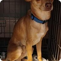 Adopt A Pet :: Elvis - Matthews, NC