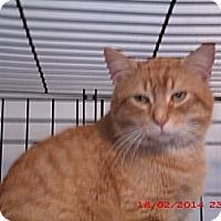 Adopt A Pet :: Oscar - Acme, PA