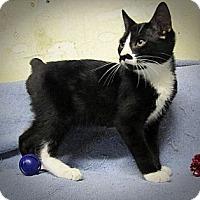 Adopt A Pet :: Mr Stubbs - Seminole, FL