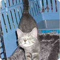 Adopt A Pet :: Trevor - Clementon, NJ