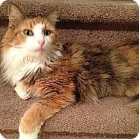 Adopt A Pet :: Felicity - East Hanover, NJ