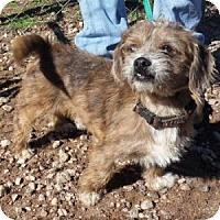Adopt A Pet :: Sparky - Athens, GA