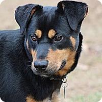 Adopt A Pet :: Nick - Prince Frederick, MD