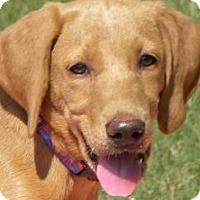 Adopt A Pet :: Anna Grace - Lewisville, IN