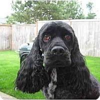 Adopt A Pet :: Buster - Tacoma, WA