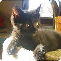 Adopt A Pet :: Greta - Portland, ME
