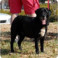 Adopt A Pet :: Murphy B - Cumming, GA