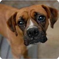 Adopt A Pet :: Suki - Albany, GA