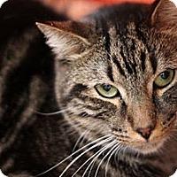 Adopt A Pet :: Ayden - Alexandria, VA