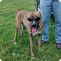Adopt A Pet :: Duke - Winchester, VA