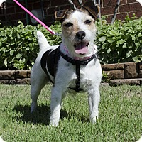Adopt A Pet :: Molly In College Station - Houston, TX