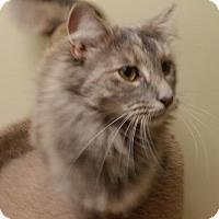 Adopt A Pet :: Corazon - Dahlgren, VA
