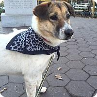 Adopt A Pet :: Mango - Long Beach, NY