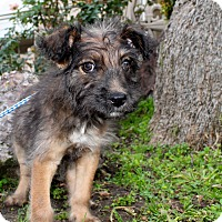 Adopt A Pet :: Gator - Los Angeles, CA