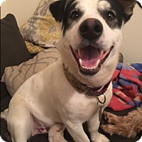 Adopt A Pet :: Johnny Galecki - Jersey City, NJ