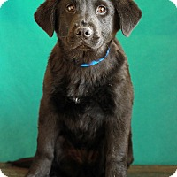 Adopt A Pet :: Blake - Waldorf, MD