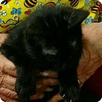 Adopt A Pet :: PeeWee - Texarkana, AR