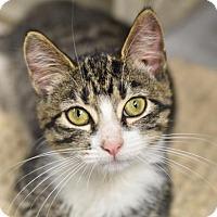 Adopt A Pet :: Trip (foster care) - Philadelphia, PA