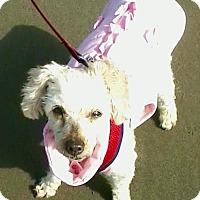 Adopt A Pet :: Millie - North Bend, WA