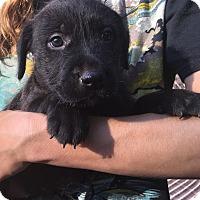 Adopt A Pet :: Sapphire (6 lb) Video! - SUSSEX, NJ