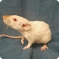 Adopt A Pet :: Cecilia - Portland, OR