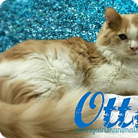 Adopt A Pet :: Otto - Tucson, AZ