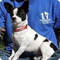 Adopt A Pet :: Skip - Berkeley Heights, NJ