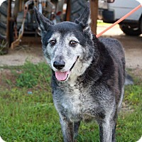 Adopt A Pet :: Larry - Summerville, SC