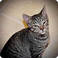 Adopt A Pet :: Rascal - Hudson, NY